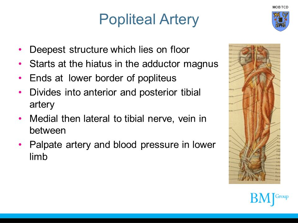 Popliteal Artery Deepest structure which lies on floor