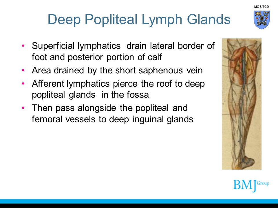 Deep Popliteal Lymph Glands
