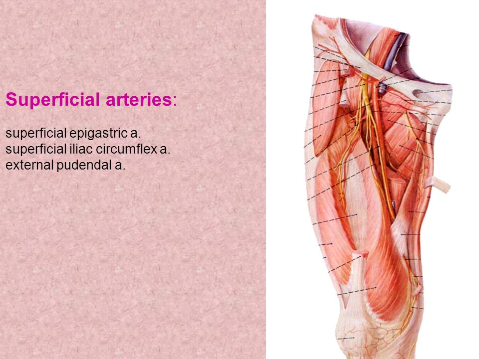 Superficial arteries: