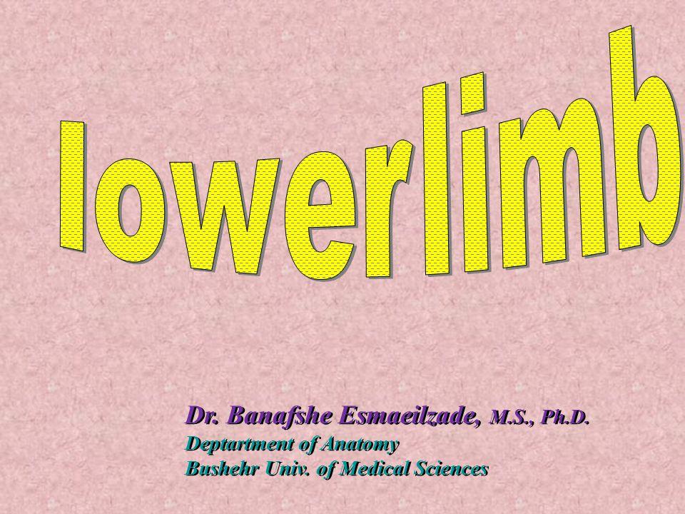 Dr. Banafshe Esmaeilzade, M.S., Ph.D.