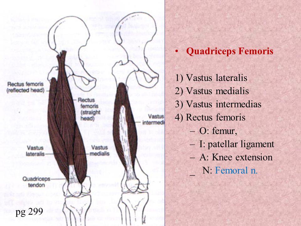 Quadriceps Femoris 1) Vastus lateralis. 2) Vastus medialis. 3) Vastus intermedias. 4) Rectus femoris.