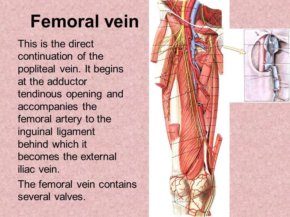 Images of Iliofemoral Vein Anatomy - #SpaceHero