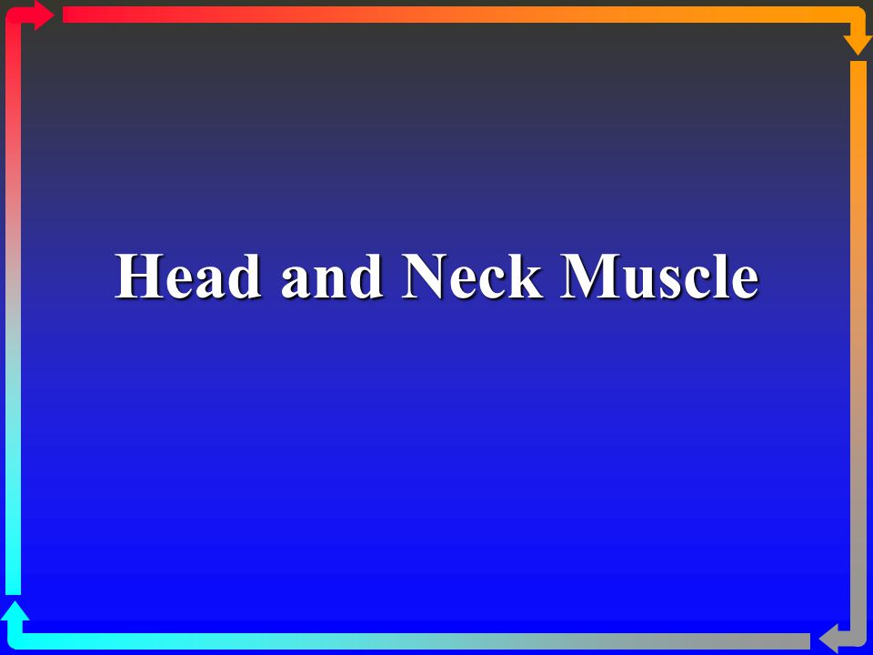Head and Neck Muscle