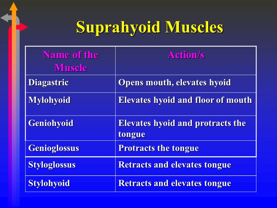 Suprahyoid Muscles Name of the Muscle Action/s Diagastric