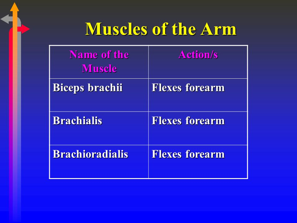 Muscles of the Arm Name of the Muscle Action/s Biceps brachii