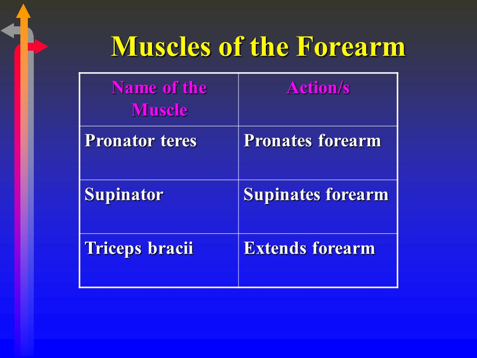 Muscles of the Forearm Name of the Muscle Action/s Pronator teres