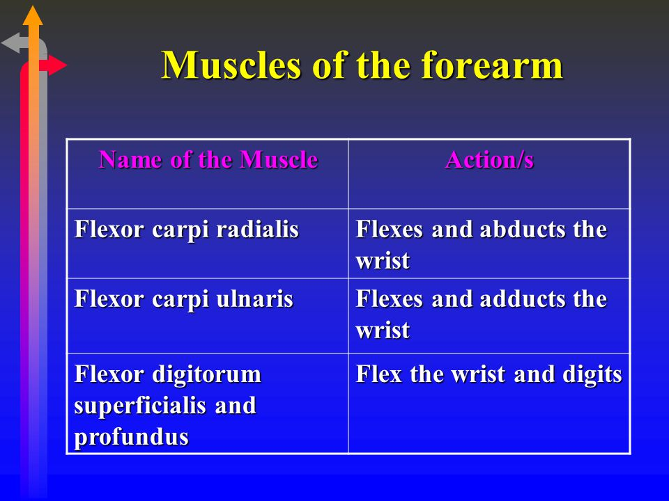 Muscles of the forearm Name of the Muscle Action/s