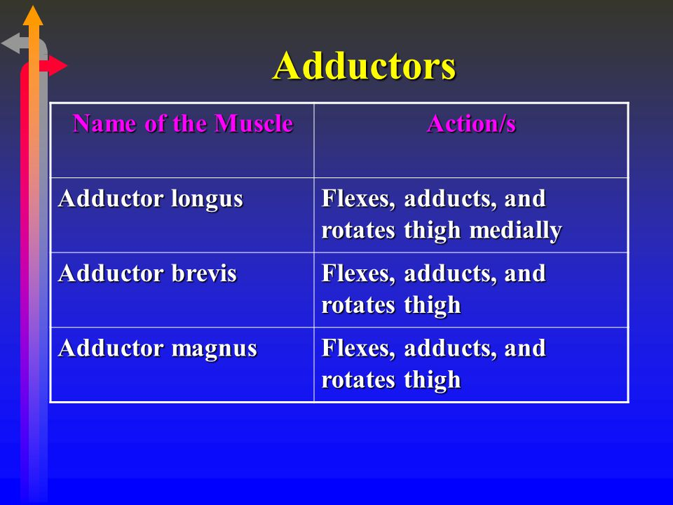 Adductors Name of the Muscle Action/s Adductor longus