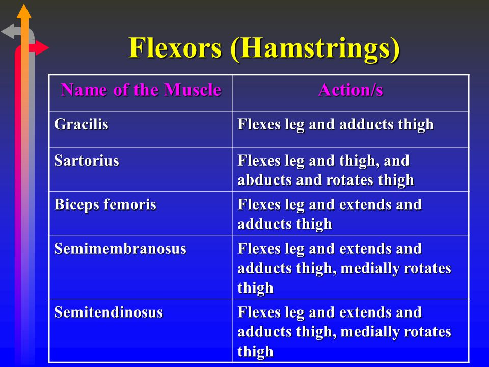 Flexors (Hamstrings) Name of the Muscle Action/s Gracilis