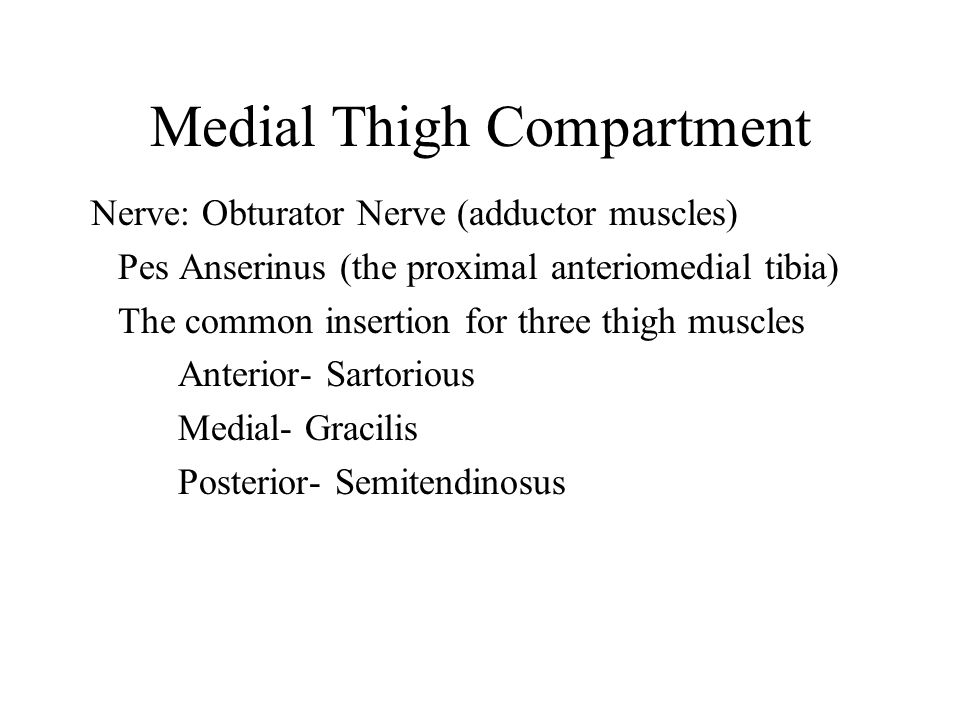 Medial Thigh Compartment