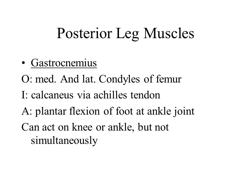 Posterior Leg Muscles Gastrocnemius O: med. And lat. Condyles of femur