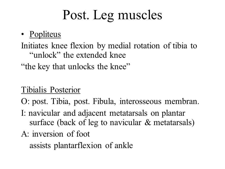 Post. Leg muscles Popliteus