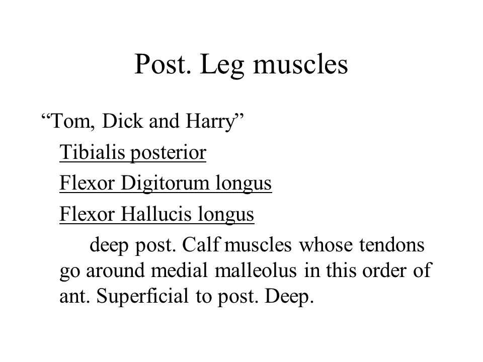 Post. Leg muscles Tom, Dick and Harry Tibialis posterior