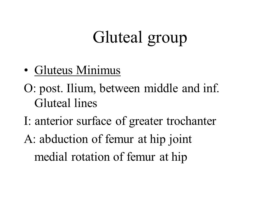 Gluteal group Gluteus Minimus