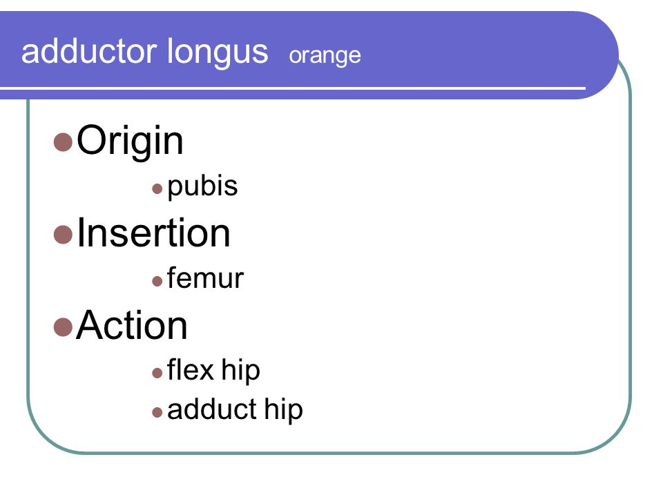 adductor longus orange