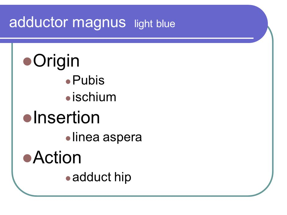 adductor magnus light blue