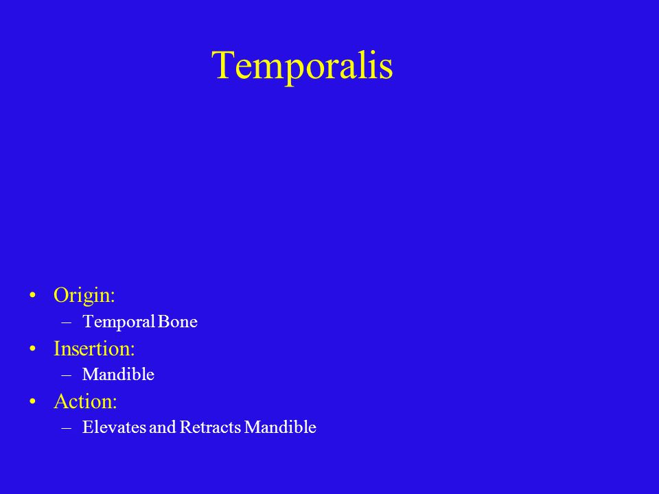 Temporalis Origin: Insertion: Action: Temporal Bone Mandible