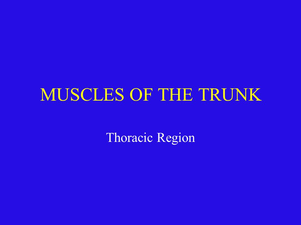 MUSCLES OF THE TRUNK Thoracic Region