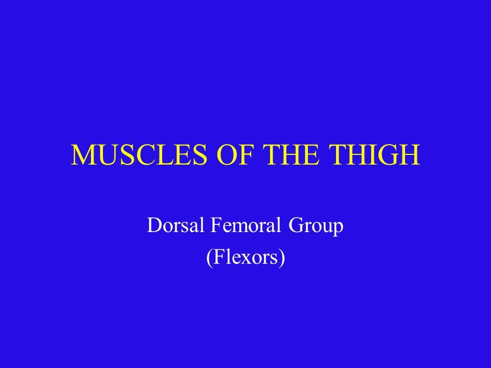 Dorsal Femoral Group (Flexors)