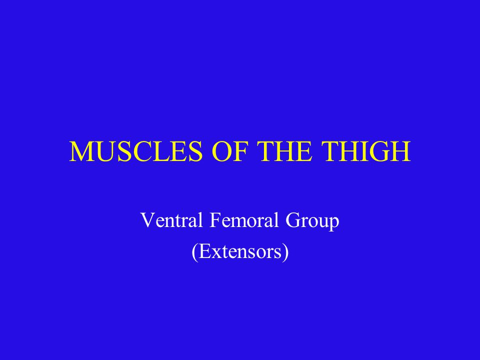 Ventral Femoral Group (Extensors)