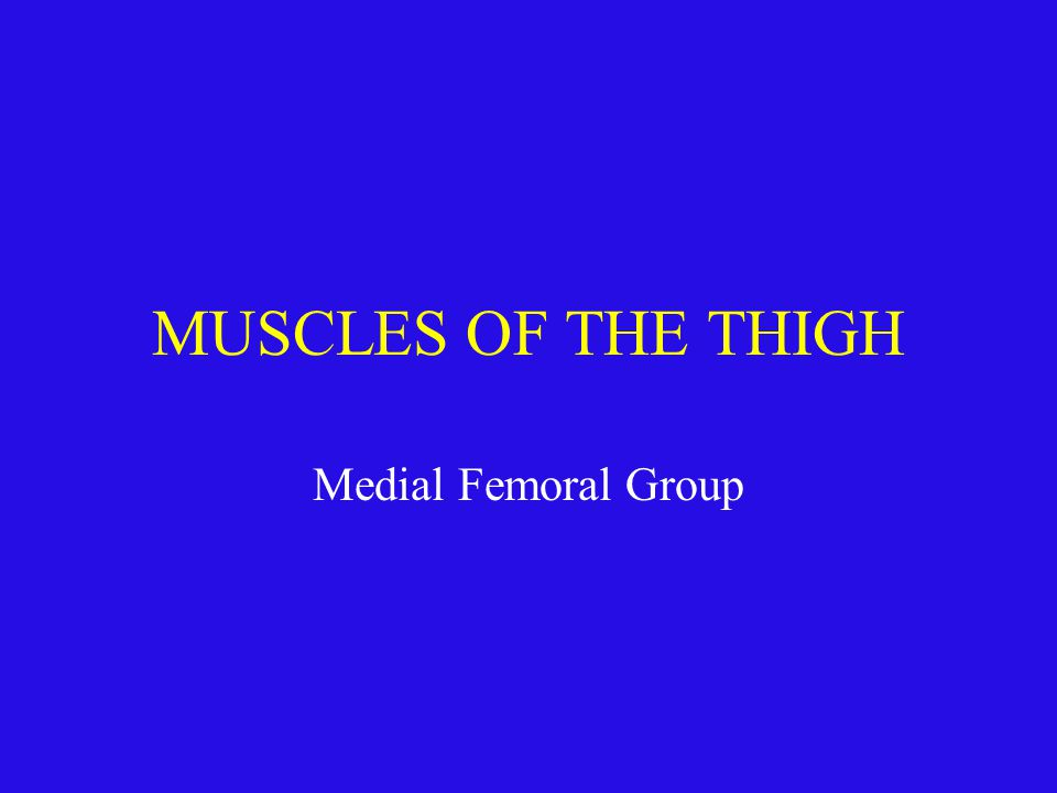 MUSCLES OF THE THIGH Medial Femoral Group