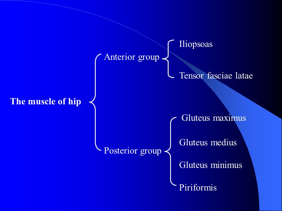 Iliopsoas Tensor fasciae latae. Anterior group. The muscle of hip. Gluteus maximus. Gluteus medius.