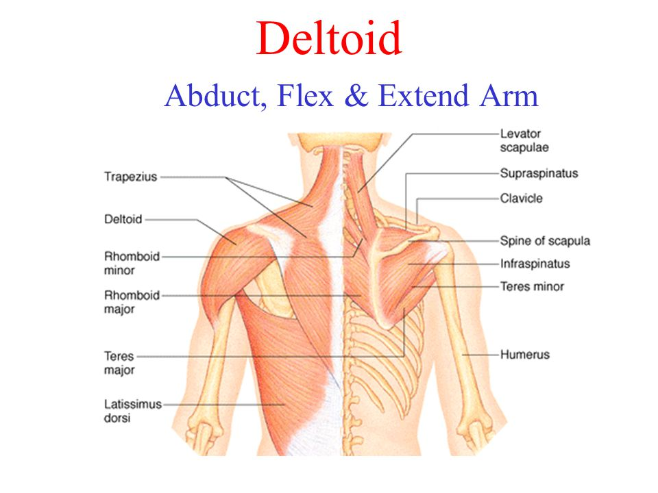 Abduct, Flex & Extend Arm