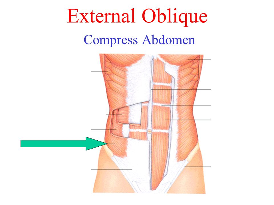 External Oblique Compress Abdomen