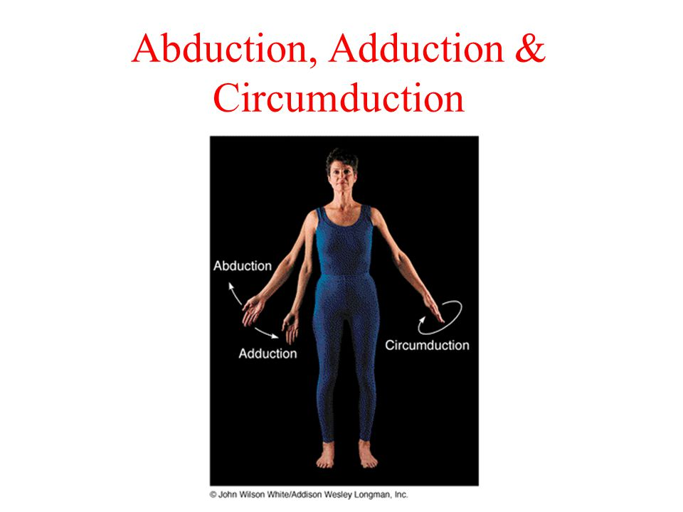 Abduction, Adduction & Circumduction