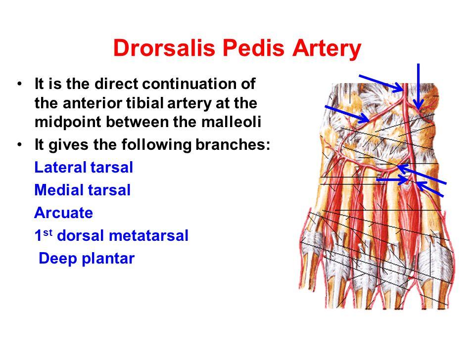Drorsalis Pedis Artery