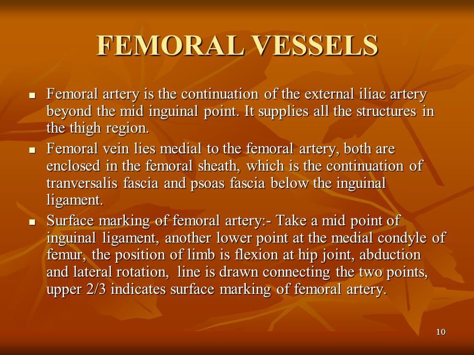 FEMORAL VESSELS