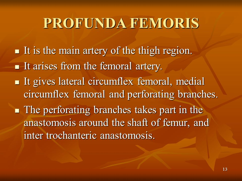 PROFUNDA FEMORIS It is the main artery of the thigh region.