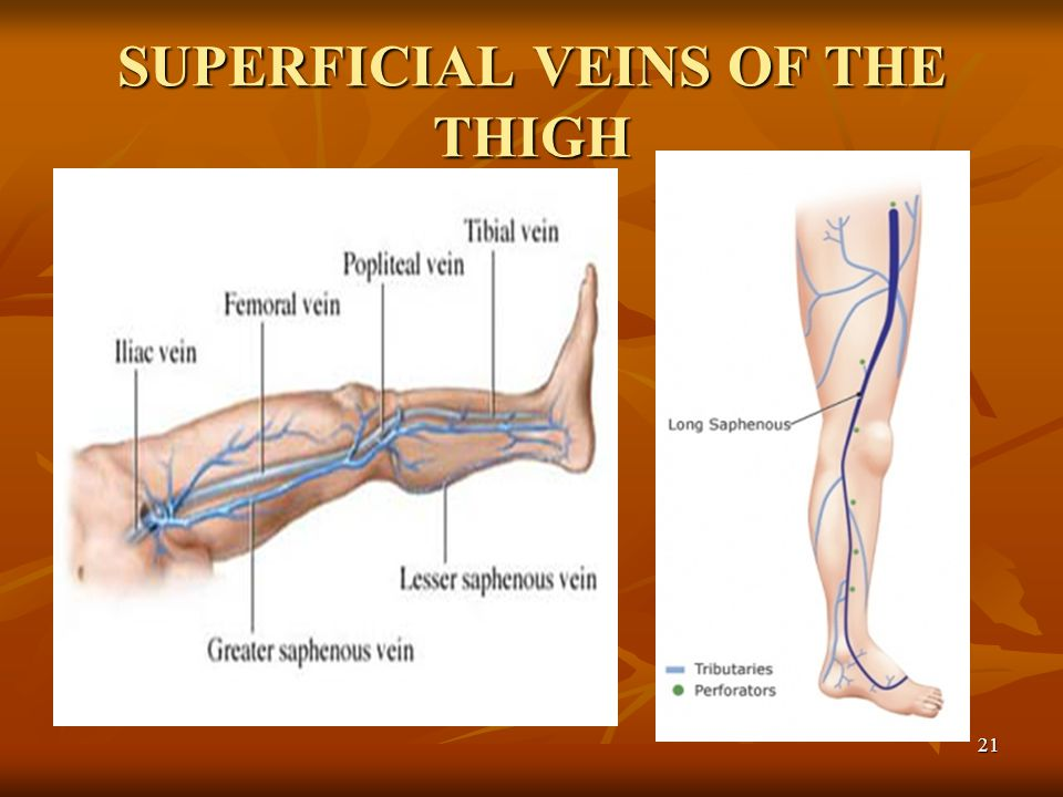 SUPERFICIAL VEINS OF THE THIGH