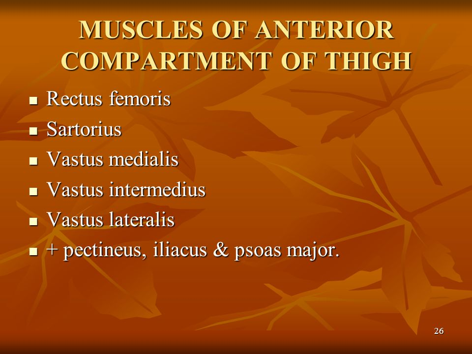MUSCLES OF ANTERIOR COMPARTMENT OF THIGH