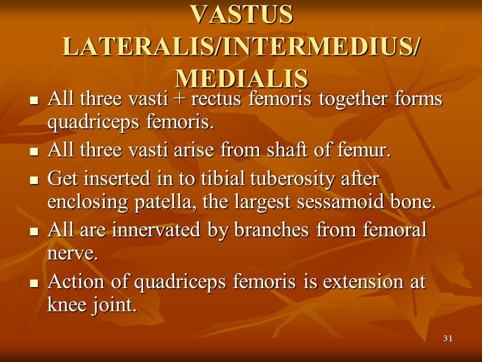 VASTUS LATERALIS/INTERMEDIUS/ MEDIALIS