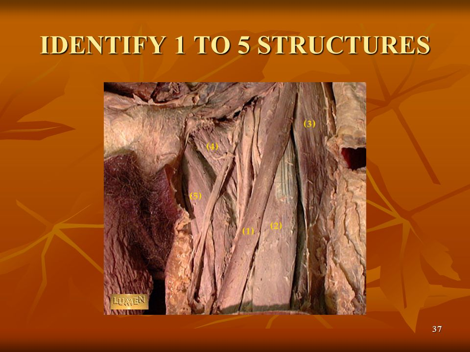 IDENTIFY 1 TO 5 STRUCTURES