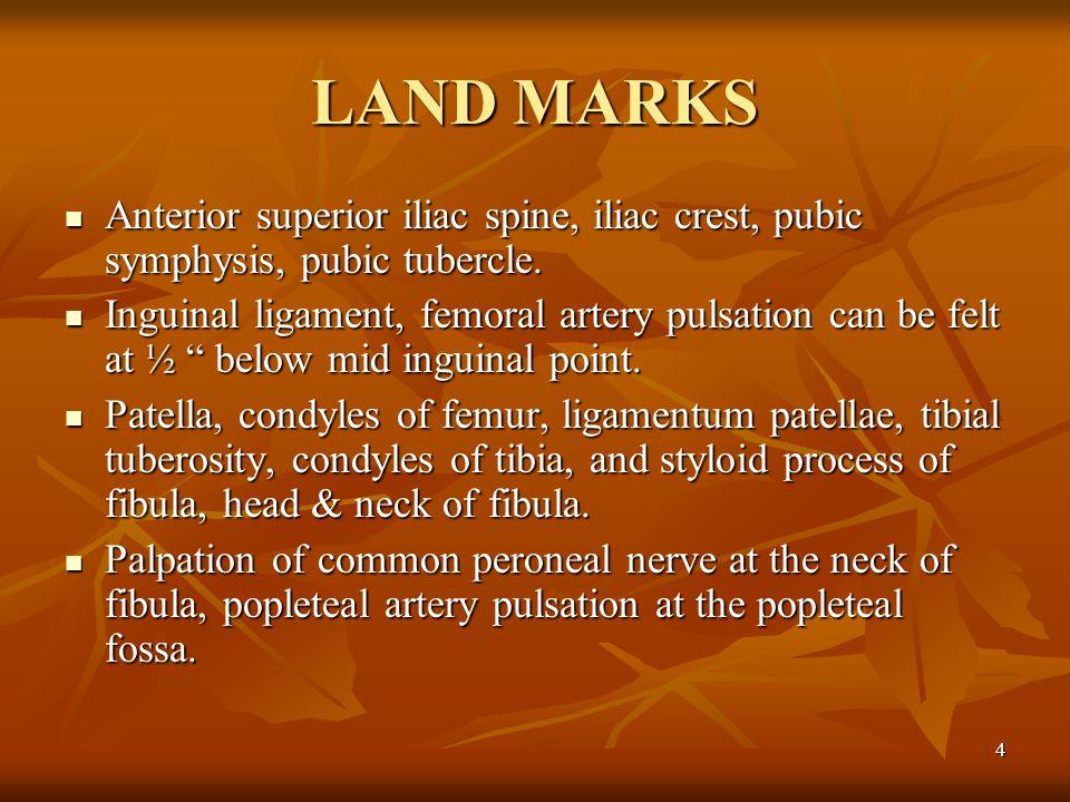 LAND MARKS Anterior superior iliac spine, iliac crest, pubic symphysis, pubic tubercle.