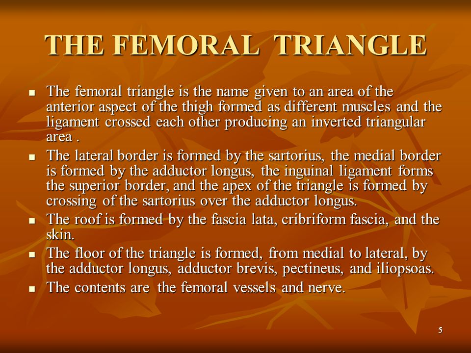 THE FEMORAL TRIANGLE
