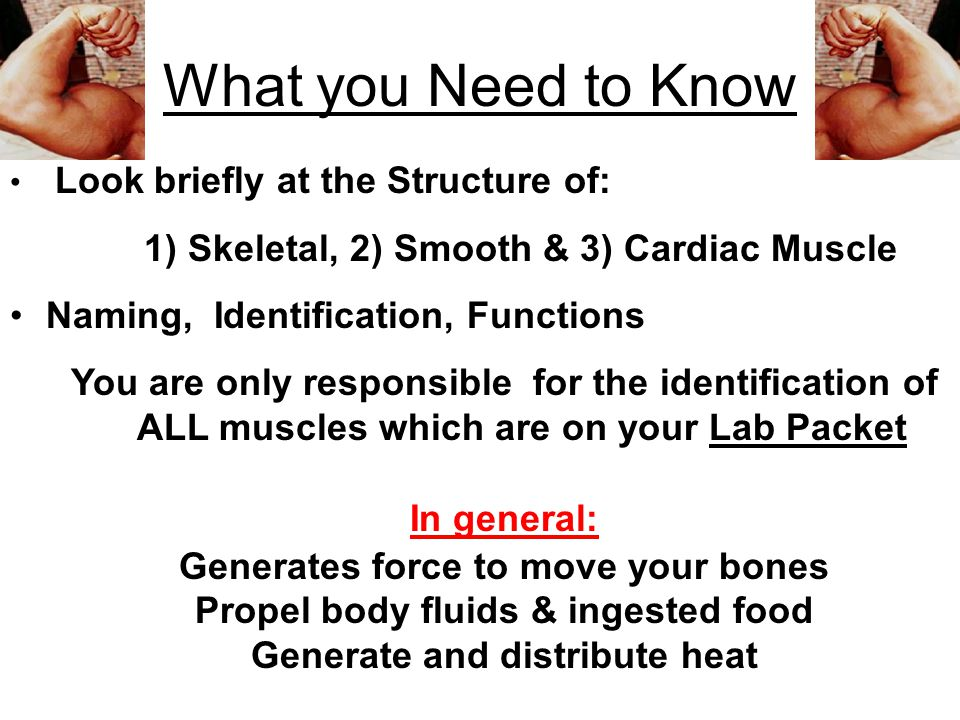 What you Need to Know 1) Skeletal, 2) Smooth & 3) Cardiac Muscle