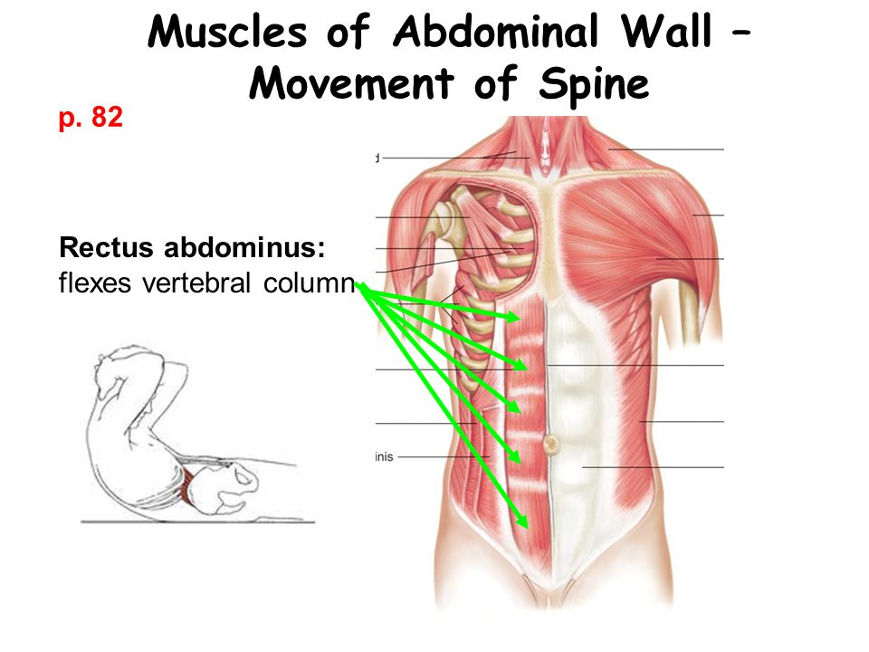 Muscles of Abdominal Wall –Movement of Spine