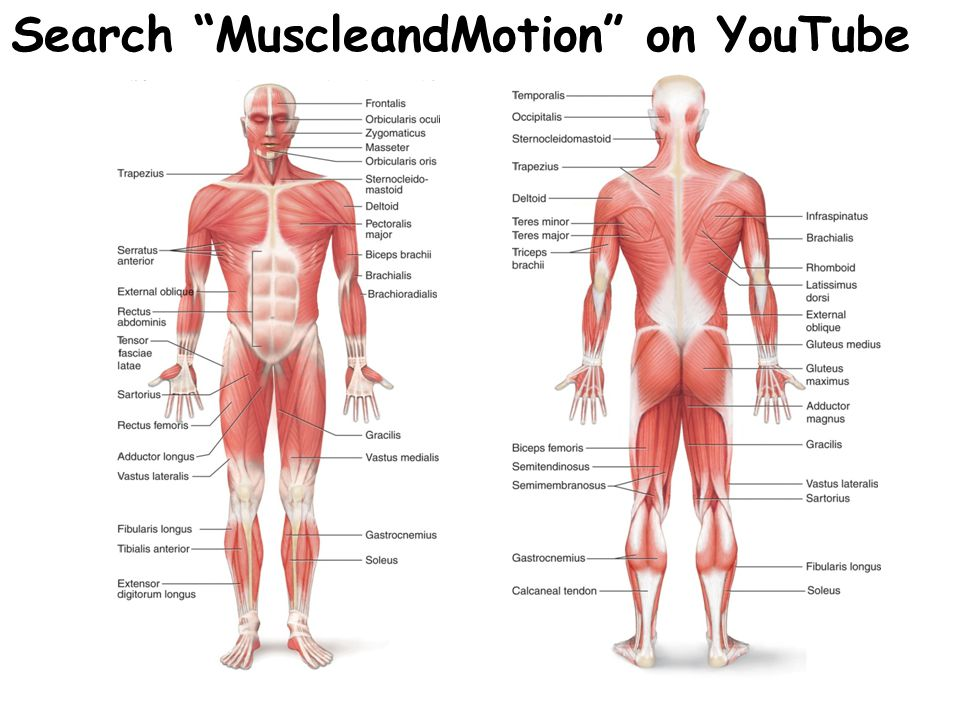 Search MuscleandMotion on YouTube