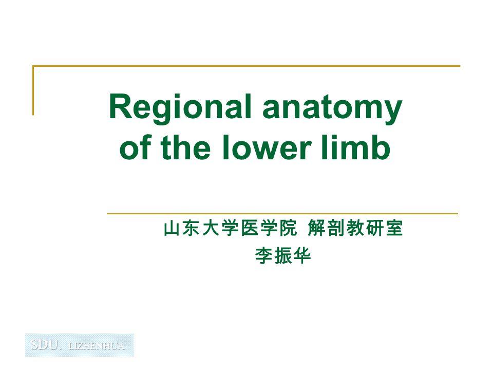 Regional anatomy of the lower limb