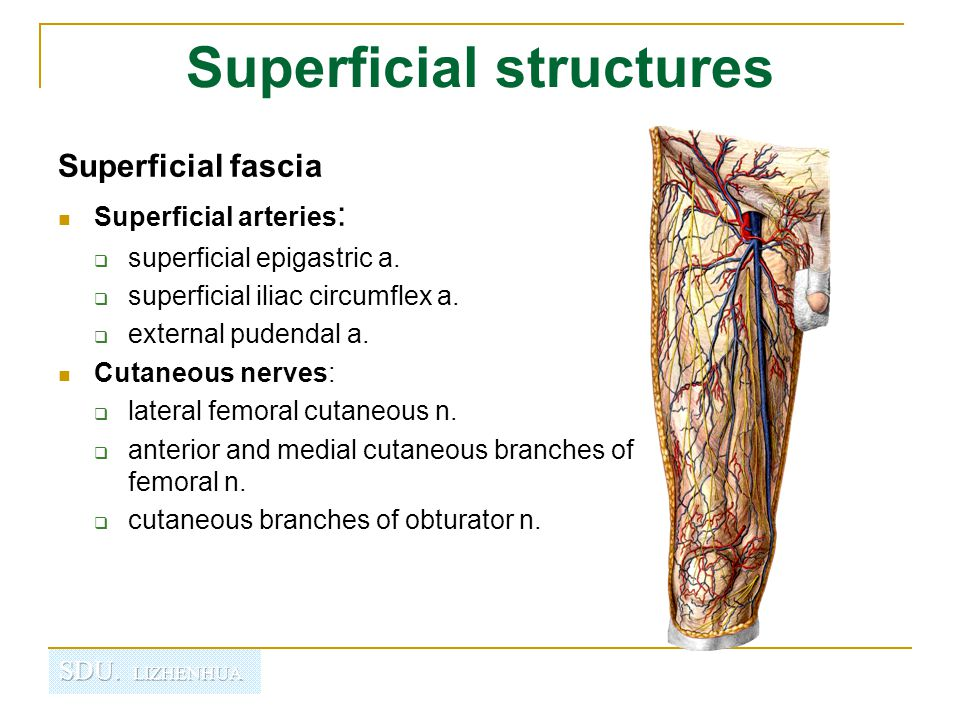 Superficial structures