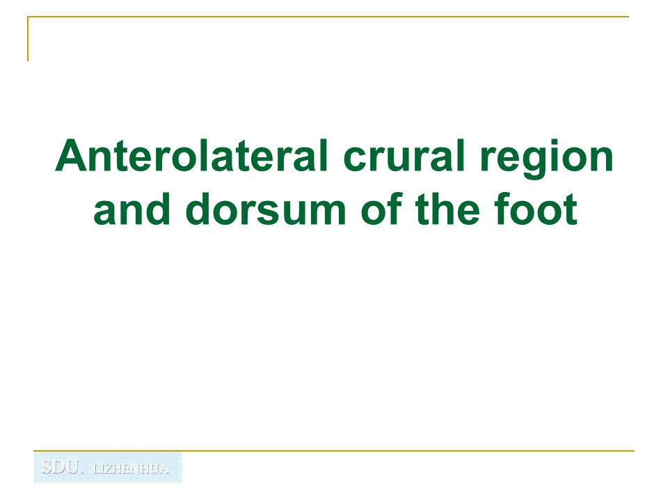 Anterolateral crural region and dorsum of the foot