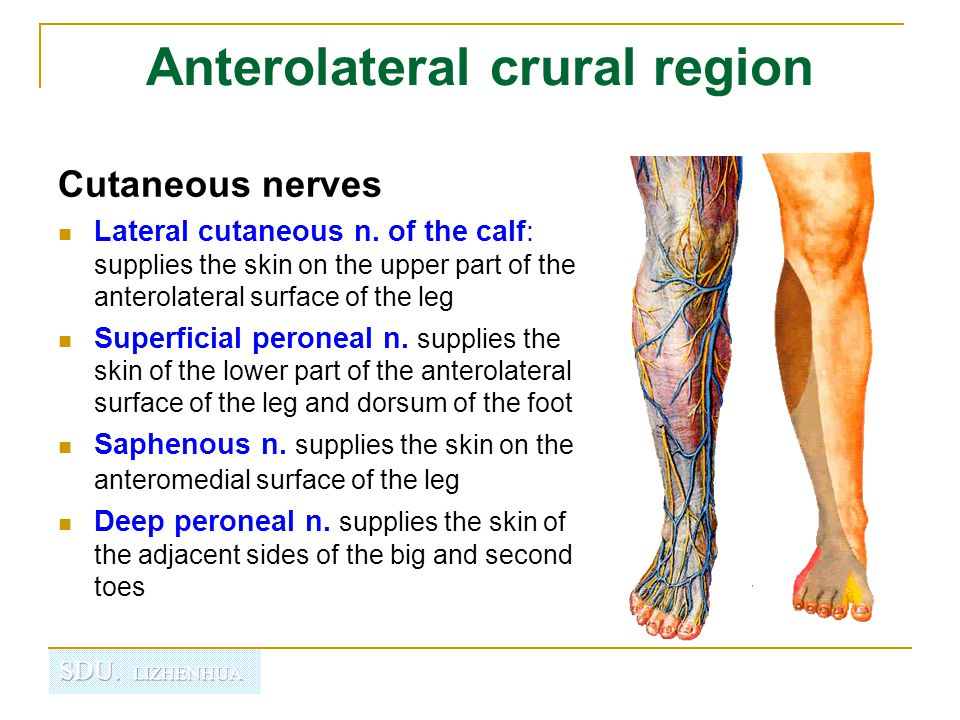 Anterolateral crural region
