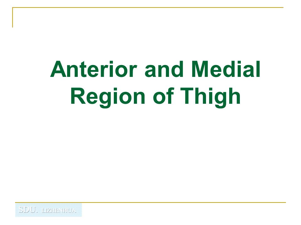 Anterior and Medial Region of Thigh