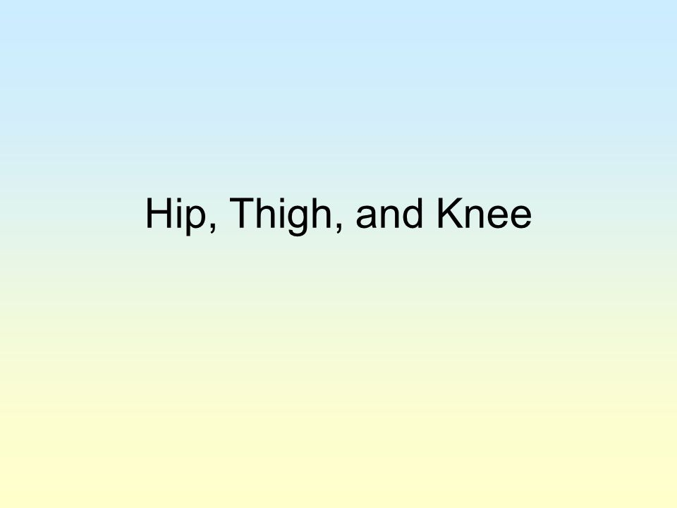 Hip, Thigh, and Knee