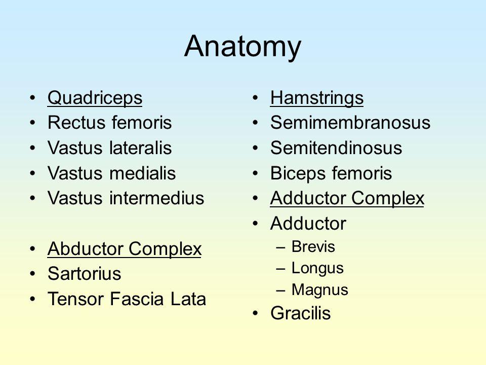 Anatomy Quadriceps Rectus femoris Vastus lateralis Vastus medialis