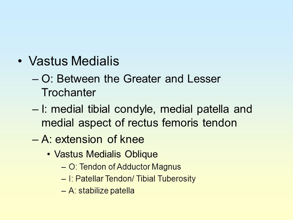 Vastus Medialis O: Between the Greater and Lesser Trochanter
