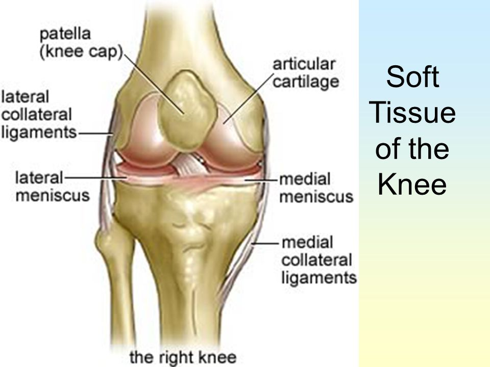 Soft Tissue of the Knee